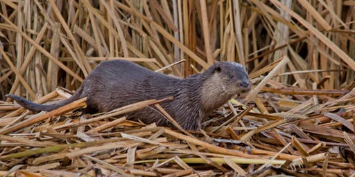 The North East Otter Survey
