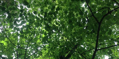 ISA Certified Arborist Test Prep Classes