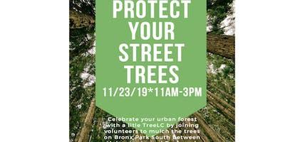 TreeLC:  Street Tree Care on Bronx Park South near Bronx Zoo