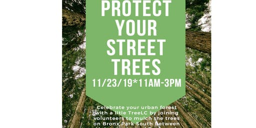 TreeLC:  Street Tree Care on Bronx Park South near Bronx Zoo
