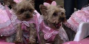 Uptown Fluff's 1st Annual Glamour Pooch Show