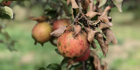 Apple Picking Volunteer Night (with a free cider tasting!) tickets