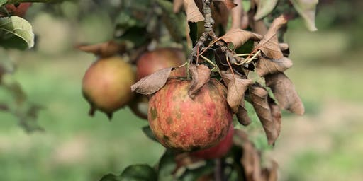 Apple Picking Volunteer Night (with a free cider tasting!)