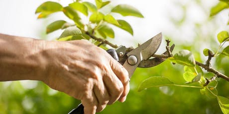 Pruning: How, Why and When tickets