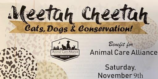 Meetah Cheetah
