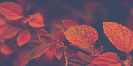 Cancelled- Autumn Immersion Forest Bathing Series at The Idaho Botanical Garden tickets
