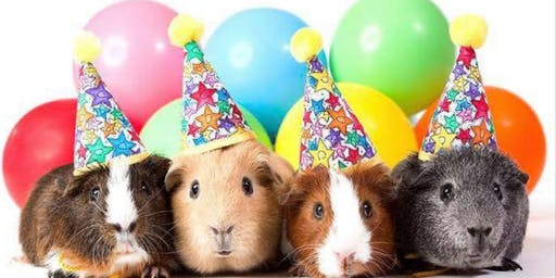 Guinea Pig Party Session 2