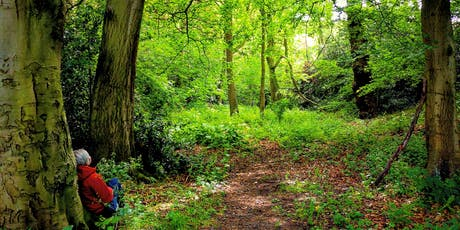 Forest Bathing  and Meditation Session - Newmillerdam tickets