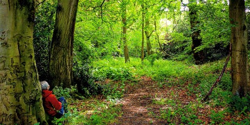 Forest Bathing  and Meditation Session - Newmillerdam