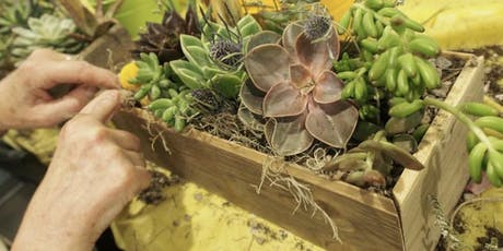 CHOOSE your Container Succulent Workshop tickets