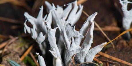 The Kingdom Of Fungi tickets