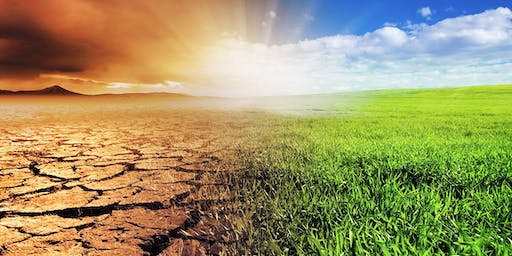 The economics and policies of low carbon transformation