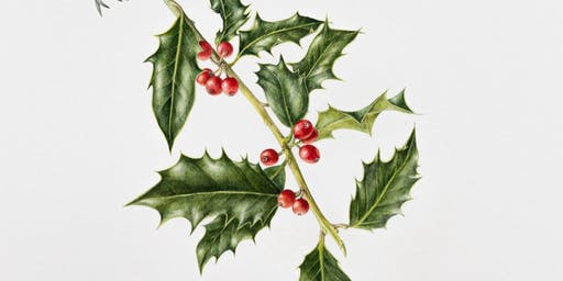 Botanical Illustrations - Winter berries