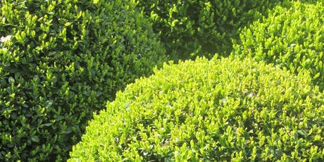 Boxwood Pruning Workshop, 2019 tickets