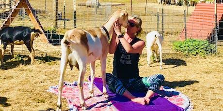 Goat Yoga at Stepladder Creamery with Tula Yoga tickets