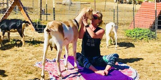 Goat Yoga at Stepladder Creamery with Tula Yoga