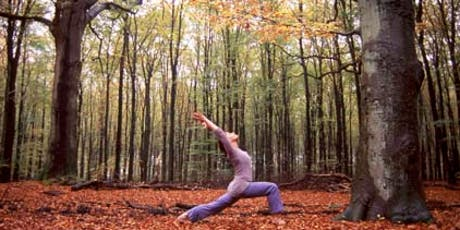 Oct 4 Week Master Teacher Yoga Class - Fall Transformation - ALL LEVELS - Mindful Flow to Yin with Meditation tickets