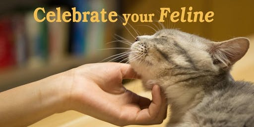 Celebrate your Feline: from grief to gratitude
