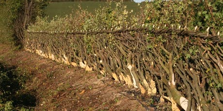 Hedgelaying North America - Hands On Hedgelaying Workshop tickets