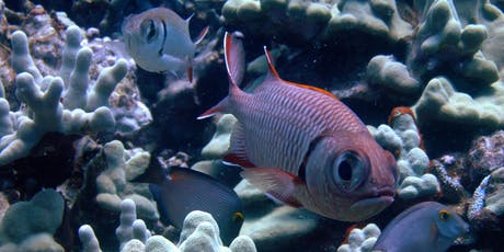 Distinguished Lecture Series: The 'Choral' Reef Fish of Hawaiʻi tickets