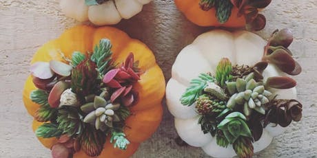 Succulent Pumpkin Workshop tickets