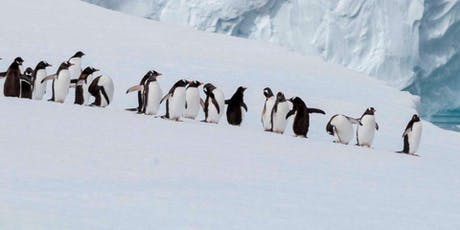 Discover Antarctica on an Expedition Cruise with Cathy Scott tickets