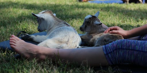 Goat Yoga Texas - Sat., Oct 5 @ 10AM