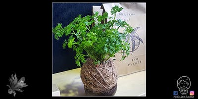 Kokedama Workshop with Rock Leaf Moss @ Newcastle Museum