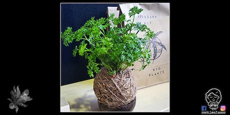 Kokedama Workshop with Rock Leaf Moss @ City Hall tickets