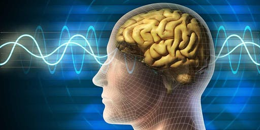Live Stream - See Me, Feel Me, Heal Me... The Neurobiology of Psychotherapy Special PTSD Edition