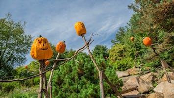 """Spooky Pumpkin Garden"""