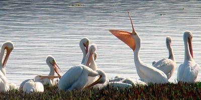 Winter Wetland Birding