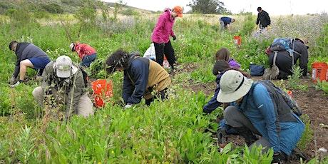 Volunteer Opportunity at Yerba Mansa Meadow tickets