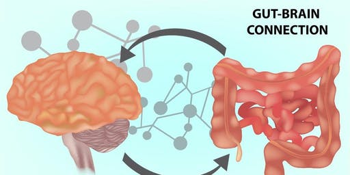 September HMN Meeting: The Gut-Brain Connection