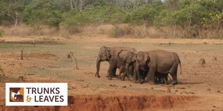 An Evening With Elephants tickets