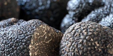 Introduction to Truffle and Hazelnut Growing - Gembrook VIC tickets