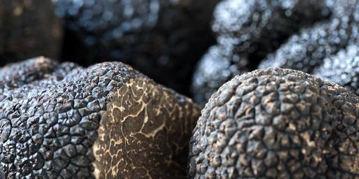 Introduction to Truffle and Hazelnut Growing - Gembrook VIC