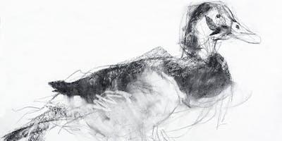 Drawing the Bird Workshop
