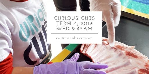 Curious Cubs Term 4 - Wed 9:45am (5 wks)