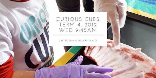 Curious Cubs Term 4 - Wed 9:45am (5 wks)