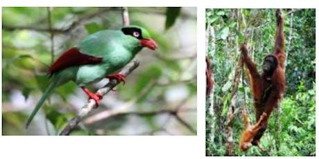 Birds, Mammals and Butterflies of Borneo – LBC Talk + Q&A (free) tickets