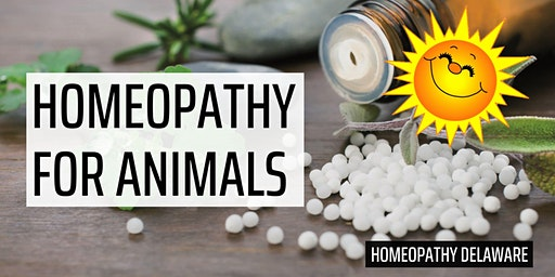 Homeopathy for Our Animal Companions
