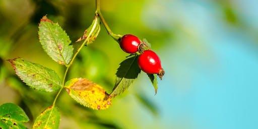 Berries & Birds