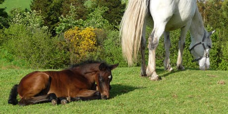 Introduction to Horses and Horse Care tickets