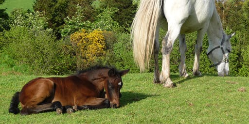 Introduction to Horses and Horse Care