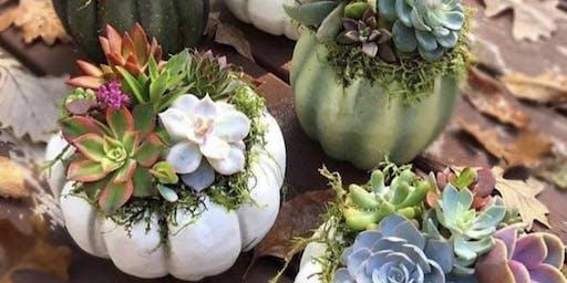 Succulent Pumpkin Diffuser