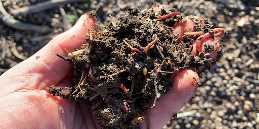 Beginners Worm Farm and Compost