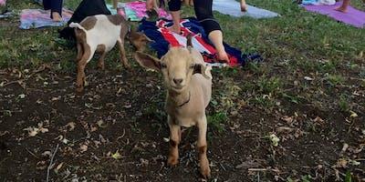 9/21 Saturday Evening Goat Yoga