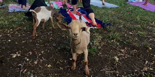 9/21 Saturday Evening Goat Yoga