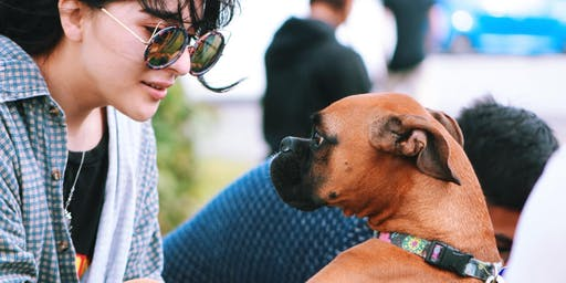 Doggy Days at Foster Single Marine Program